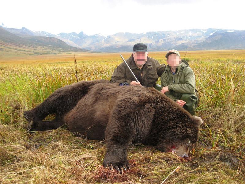 Alaszka - kodiak medve