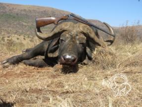 Dél-afrikai Köztársaság - kafferbivaly vadászat