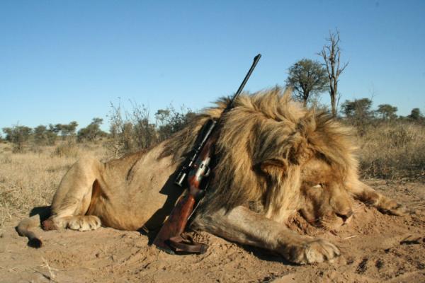 Dél-Afrika oroszlán vadászat