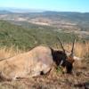 Dél-Afrika antilop vadászat