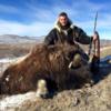 Grönland pézsmatulok vadászat