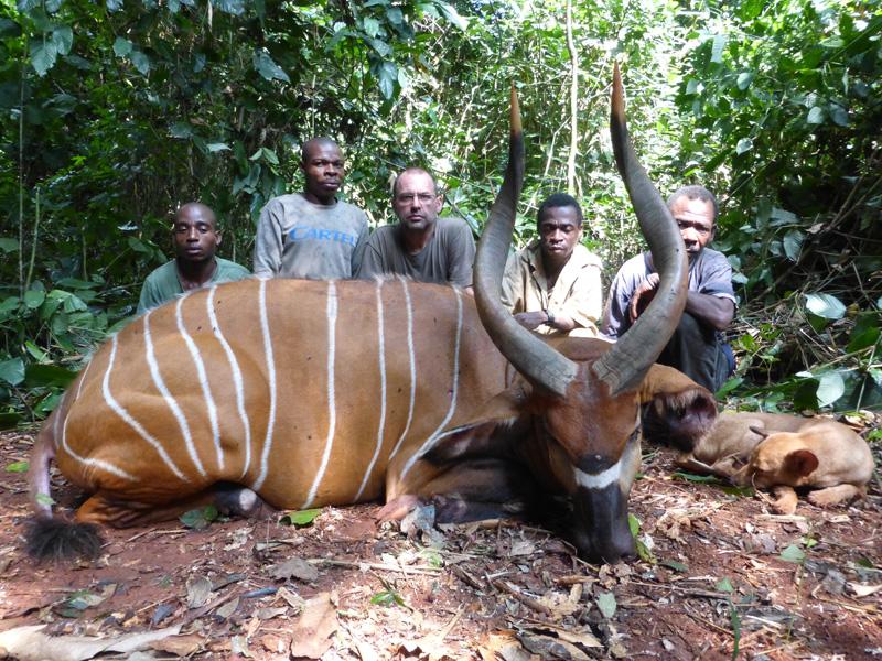 Kamerun bongó és szitatunga vadászat