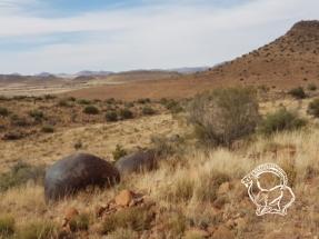 Dél-afrikai Köztársaság - green rhino vadászat