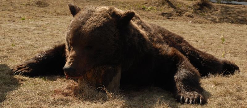 Románia vadászat