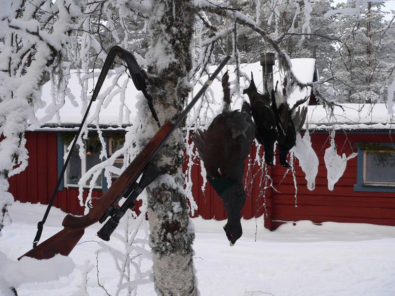 Svédország vadászat, fajdfélék
