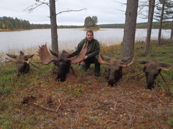 Jávor vadászat Svédországban