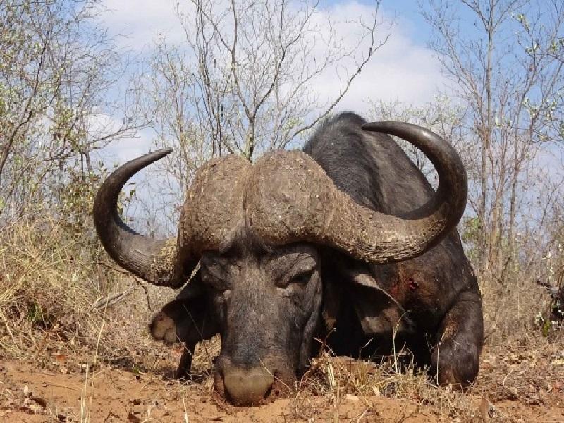 Tanzánia vadászat