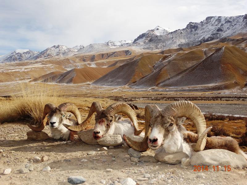 Kirgizisztán vadászat
