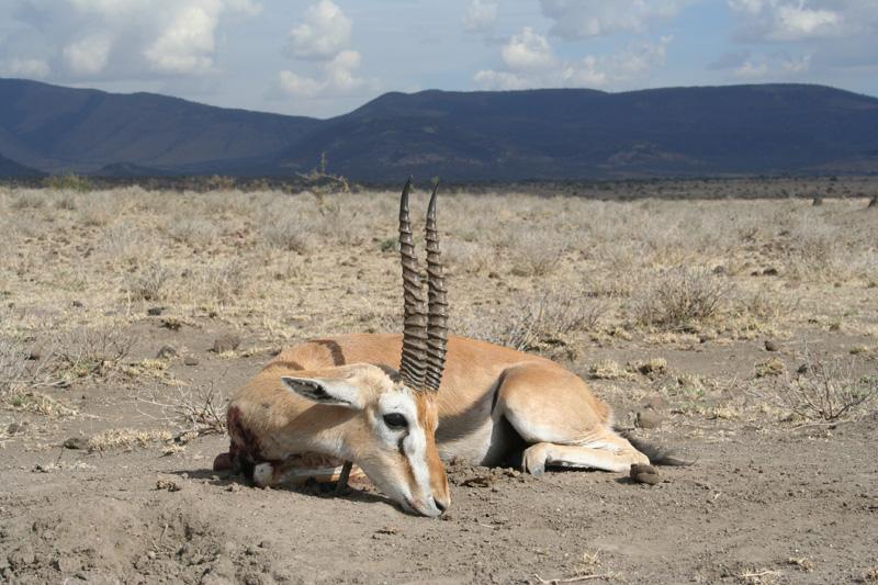 Tanzánia antilop vadászat, Maszályföld