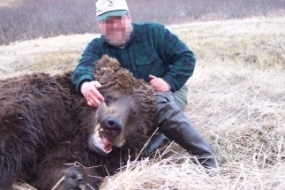 Alaszka - medve