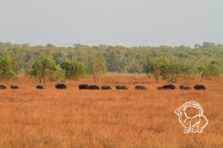 Ausztrália vadászat