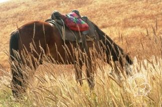 Kazahsztán, maral vadászat
