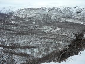 Oroszország, Kamcsatka, Jávorszarvas