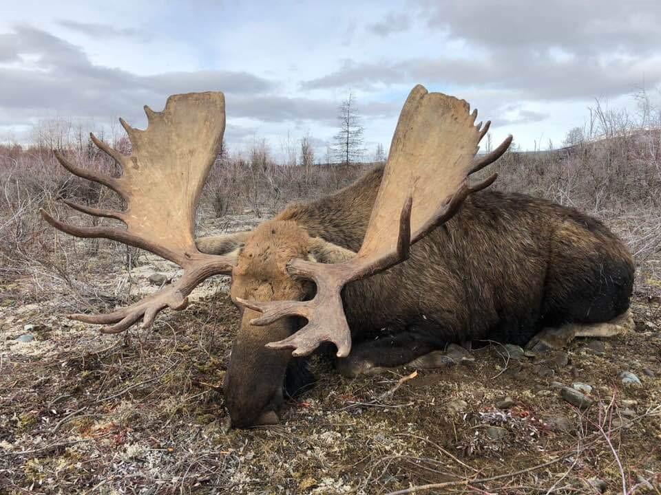 Oroszország, Magadan, jávorszarvas vadászat