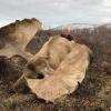 Oroszország, jávorszarvas, Magadan