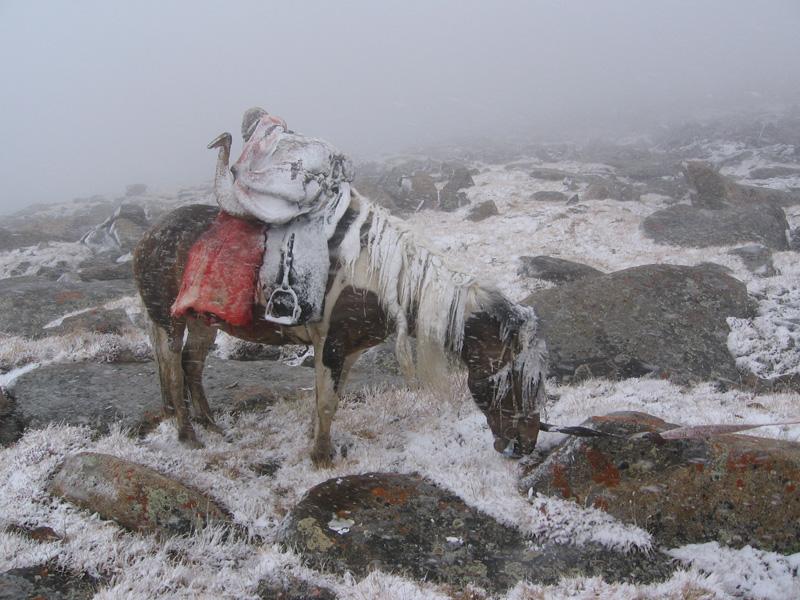 Mongólia Altaj Argali