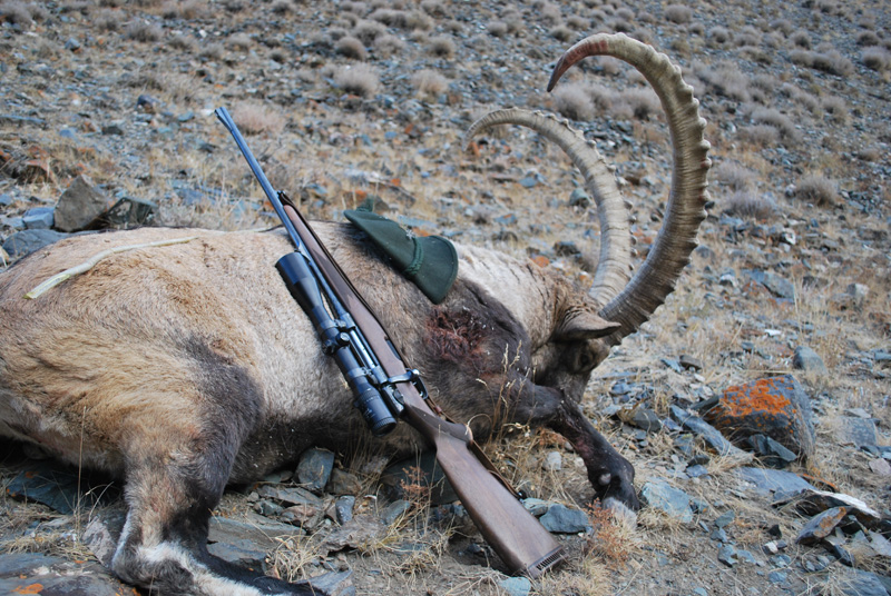 Mongólia Altaj Kőszáli kecske