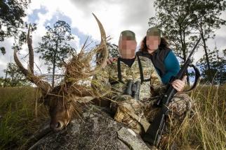 Ruza szarvas, Ausztrália