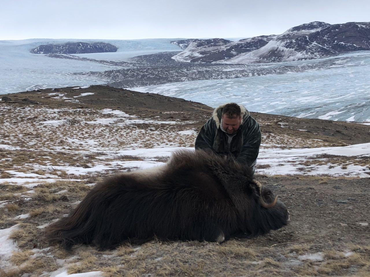 Pézsmatulok vadászat Grönlandon