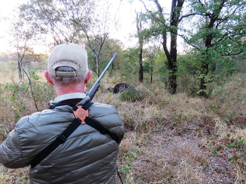 Zimbabwe kafferbivaly vadászat