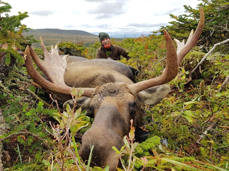 Jávorszarvas vadászat, Új-Fundland